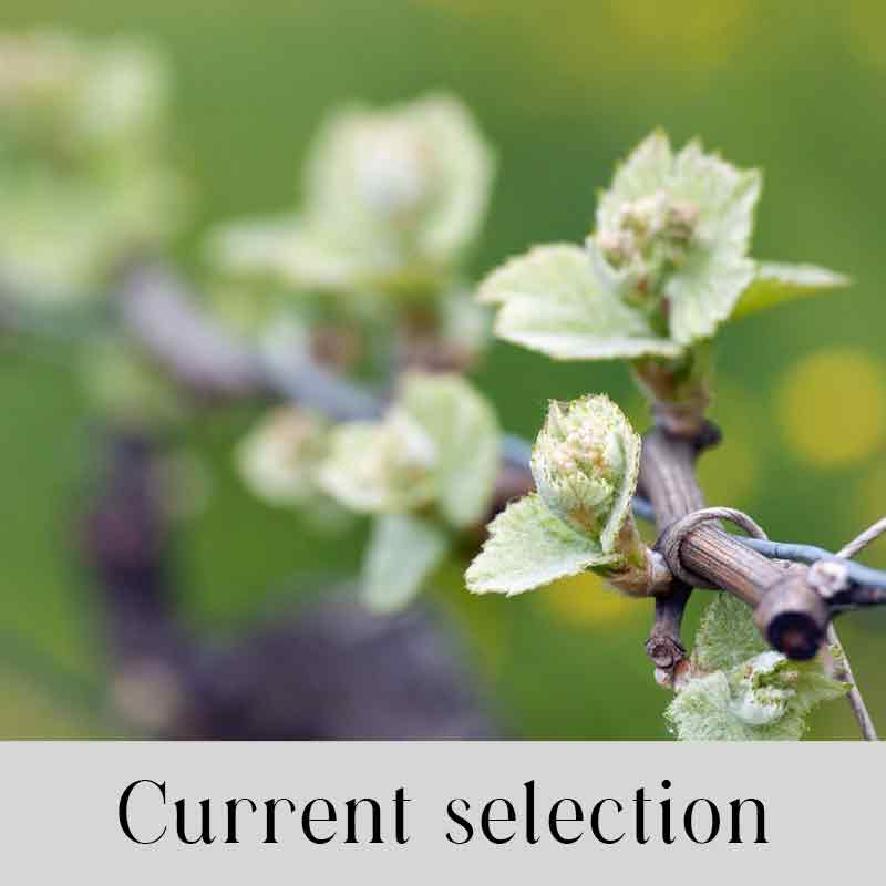 Current-selection