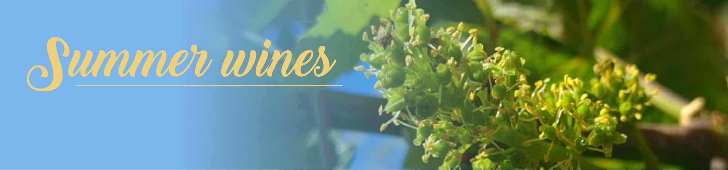 Your summer wine selection